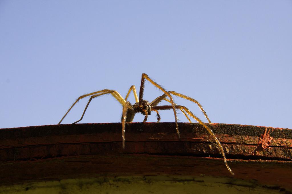 Mörderische Spinne