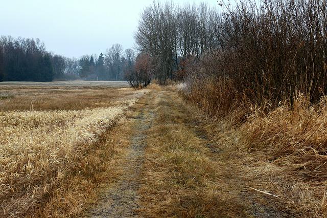 autumn-247989_640
