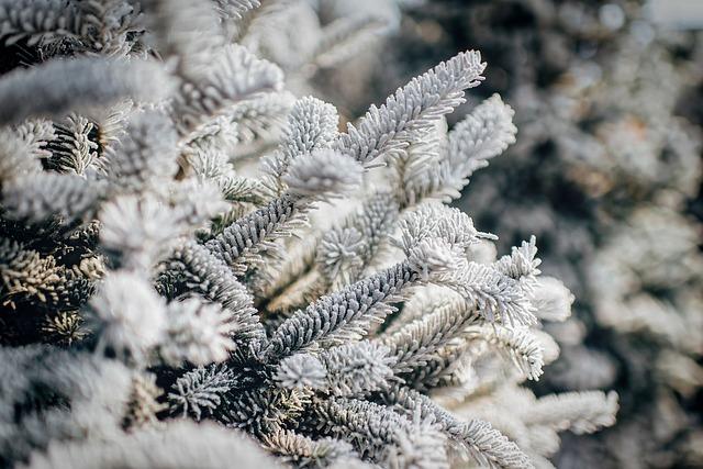 winter-1863757_640